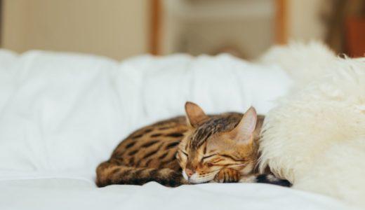 午後になっても集中力を切らさないための仮眠のコツ